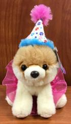 Image for the Plush, Itty Bitty Boo Dog, Gund #027 Birthday Tutu product